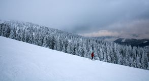 Winter landscape skier coming down from hill on forest Royalty Free Stock Photography