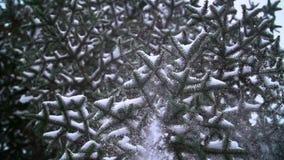 Winter landscape. Slow motion snow falling in stock video footage