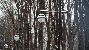 Winter landscape. Slow motion snow falling in stock footage
