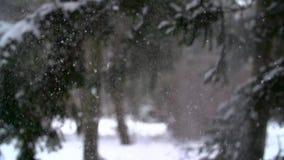 Winter landscape. Slow motion snow falling in. Winter tree park HD stock video footage