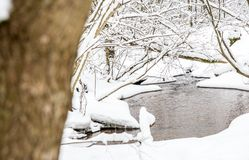 Winter landscape of small forest stream Stock Photos