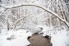 small forest stream in winter Royalty Free Stock Photos