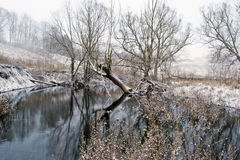 Winter landscape. Small river and trees in the winter Stock Images