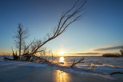 Winter landscape with snag on the frozen lake Royalty Free Stock Photo
