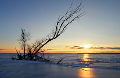 Winter landscape with snag on the frozen lake Royalty Free Stock Photos