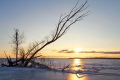 Winter landscape with snag on the frozen lake Royalty Free Stock Image