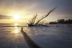 Winter landscape with snag on the frozen lake Royalty Free Stock Photography