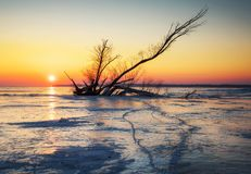 Winter landscape with snag on the frozen lake Stock Photos