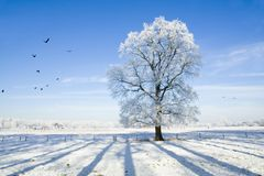 Winter landscape with snow Stock Photography