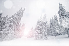 Winter landscape with snow. Pine trees covered with snow, winter landscape stock photos
