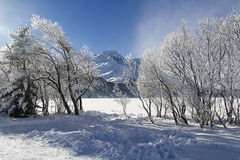 Winter landscape. In the snow Stock Image