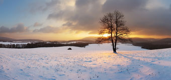 Winter landscape with snow and alone tree - panorama Stock Images
