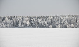 Winter landscape with snow Stock Images