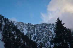 Winter Landscape  with Snow Royalty Free Stock Photography