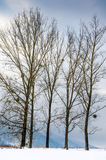Winter landscape, snow-capped mountains, trees on a background o Stock Photos