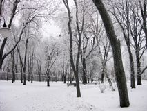 Winter in the park. Winter landscape with snow-capped trees in the park royalty free stock photography