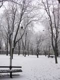 Winter in the park. Winter landscape with snow-capped trees in the park royalty free stock image