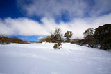 Winter landscape with snow Royalty Free Stock Image