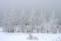 Winter landscape, snow-covered birch trees on the background of snow clouds, great view.  royalty free stock photo