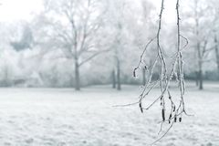 Winter landscape with a snow-covered branch. In the foreground Stock Image