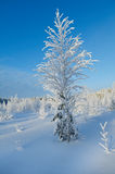 Winter landscape. Snow-covered branches of trees and shrubs stock images