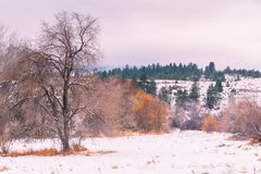 Snow covered field and trees at sunset royalty free stock photography