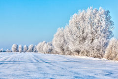 Winter landscape snow-covered fields Stock Image
