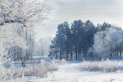 Winter landscape of snow-covered fields, trees Stock Photography