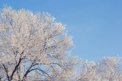 Winter landscape of snow-covered fields, trees Stock Photo