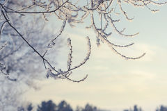 Winter landscape of snow-covered fields, trees Royalty Free Stock Photo