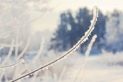 Winter landscape of snow-covered fields, trees Stock Images