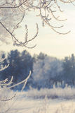 Winter landscape of snow-covered fields, trees Stock Photos