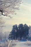 Winter landscape of snow-covered fields, trees Royalty Free Stock Photography