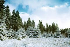 Winter landscape with snow covered fir trees and blue sky. royalty free stock photography