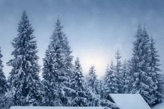 Winter landscape with snow covered fir trees. And roof of hut Royalty Free Stock Image
