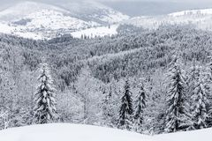 Snow-covered firs Stock Photos