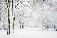Winter landscape through snow covered forest Stock Photos
