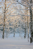 Winter landscape with a snow-covered forest Stock Image