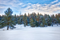 Winter landscape with snow covered forest stock images