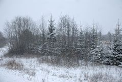 Winter landscape. Snow-covered forest edge. Snowfall. royalty free stock photo