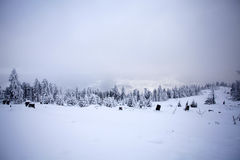 Winter landscape with snow covered forest Royalty Free Stock Image