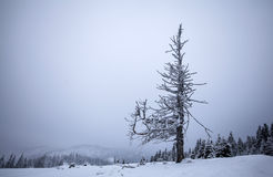 Winter landscape with snow covered forest Royalty Free Stock Images