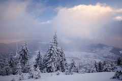Winter landscape with snow covered forest Stock Photography