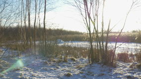 Winter landscape - snow-covered forest with small trees covered with ice and snow lake. A cold winter day. stock video
