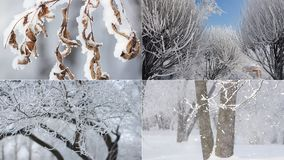 Winter landscape - snow-covered forest in sunny weather. stock video footage