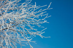 Winter landscape - snow covered icy white branches Stock Photo