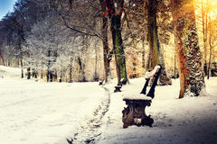 Winter landscape with snow covered park alley Stock Image