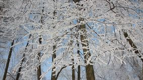 Winter landscape - a snow-covered park with beautiful trees, covered with hoarfrost. A Christmas picture - a winter forest, a sunny day in a fairy-tale park stock footage