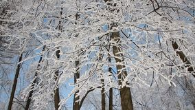 Winter landscape - a snow-covered park with beautiful trees, covered with hoarfrost. A Christmas picture - a winter forest, a sunny day in a fairy-tale park stock video footage