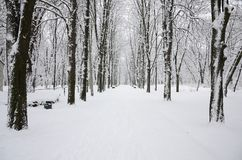 Winter landscape in a snow-covered park after a heavy wet snowfall. A thick layer of snow lies on the branches of trees.  stock photos